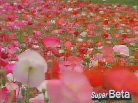 Sony Betamax Super Beta Demo Tape From 1985