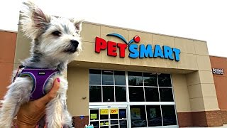 getlinkyoutube.com-Zumi's New Haircut and Pet Store Visit - Puppy Toys, Clothes and Treats - DCTC Morkie