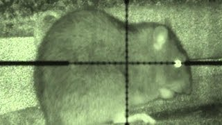 getlinkyoutube.com-Budget night vision ratting