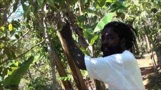 getlinkyoutube.com-Plantation of Marihuana - Nine Miles - Jamaica