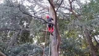getlinkyoutube.com-CO.GI.GARDEN Tree Climbing Roma