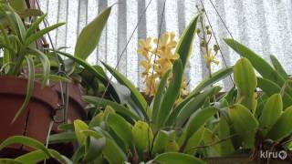 getlinkyoutube.com-Orchid greenhouse|Monica Gaylord|Central Texas Gardener