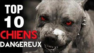 getlinkyoutube.com-Top 10 DES CHIENS LES PLUS DANGEREUX DU MONDE !