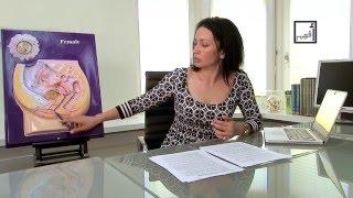 getlinkyoutube.com-Vagina Talk معلومات أساسية عن المهبل