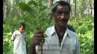 getlinkyoutube.com-The Jungle Shamans (Part 1)