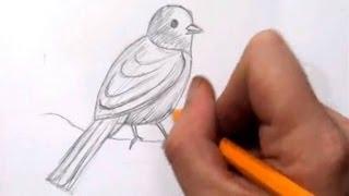 getlinkyoutube.com-How To Draw a Bird - Real Time Quick Sketch