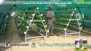 زيارة لمزرعة سمو الشيخ سلطان بن خالد القاسمي في الشارقة وتفقد الجت-البرسيم