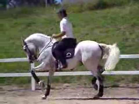 Cavalo Puro Sangue Lusitano, URCO