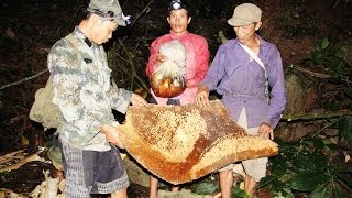 getlinkyoutube.com-Khai thác Mật Ong Rừng ở Lai Châu