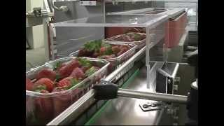 FLOW PACK MACHINE FOR STRAWBERRIES WITH AUTOMATIC FEEDING, MOD  LYRA
