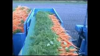 getlinkyoutube.com-ASA-LIFT PO-335 Bunched carrots