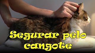 getlinkyoutube.com-Segurar o gato pelo cangote pode? #72