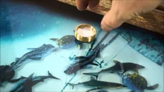 getlinkyoutube.com-Нарды с рыбками плавающими внутри - V2. Лайкни видео !