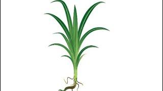getlinkyoutube.com-3 pemuda anak alfatoni buat lagu untuk perwira fatoni