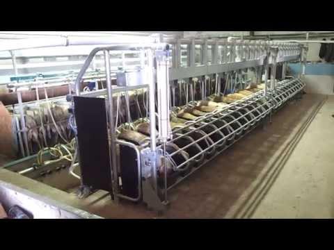 Goat Sheep Milking Parlour Fast Exit Stall  - Παγίδα Γρήγορης Διαφυγής για Κατσίκια και Πρόβατα