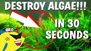 getlinkyoutube.com-How To DESTROY Algae in 30 Seconds (Get Rid Of Aquarium Algae FAST)