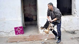 getlinkyoutube.com-اسر بأطفالها وكلاب مشردة داخل فيلات هاي كلاس بأنفا