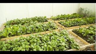 getlinkyoutube.com-How to start a vegetable garden (开垦新菜园)