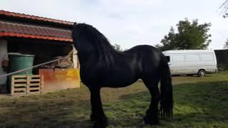 getlinkyoutube.com-Valoarea  cailor   cal de vânzare  2015