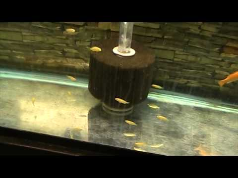 Fish Room Update 4 new African Cichlid Breeding colonies