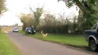getlinkyoutube.com-Hunting brutality that Cameron wants to legalise