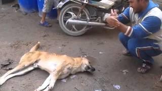 getlinkyoutube.com-تحشيش عراقي على كلب 2014