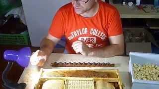 getlinkyoutube.com-Cresterea Matcilor cu Cutia Nicot recoltare larve pt dubla trazvazare
