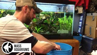 How to do a water change: doing water changes in the planted tank. What to do and what not to do