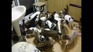 猫家族の食事風景Ⅱ Cat family dining landscape Ⅱ