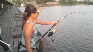 getlinkyoutube.com-fishing @ Bungsamran Thailand 2/4/2556 The Mekong giant catfish.