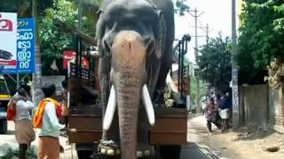 getlinkyoutube.com-BASTIN VINAYASUNDER /star elephants