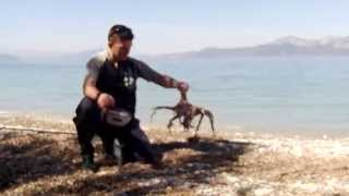 getlinkyoutube.com-ΨΑΡΕΜΑ ΤΣΙΠΟΥΡΑΣ ΜΕ ΧΤΑΠΟΔΙ ΜΑΖΙ