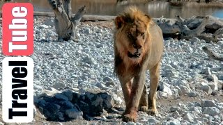 4wd Safari Namibië part 13 (HD 1080p): Okaukuejo Waterhole Etosha National Park