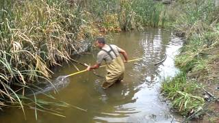 getlinkyoutube.com-carp spear fishing