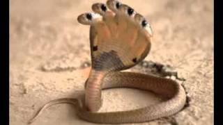 getlinkyoutube.com-Serpiente con 5 cabezas