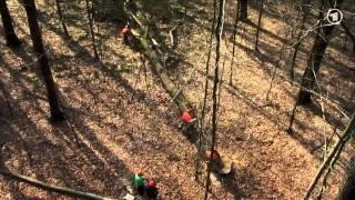 getlinkyoutube.com-Die Sendung mit der Maus: Ein Baum (Teil 1)