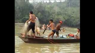 getlinkyoutube.com-Ikan Patin Raksasa Montok Menggemaskan