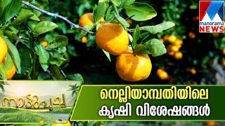 getlinkyoutube.com-Farming experiments in Nelliyampathi | Manorama News | Nattupacha