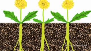 Шокирующая, правда, о сорняках в земледелии. Смотреть ВСЕМ!!!