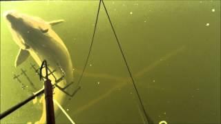 getlinkyoutube.com-Sturgeon Spearing 2014 Lake Winnebago 2nd Chance