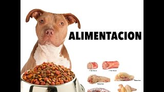 getlinkyoutube.com-ALIMENTACION PITBULL