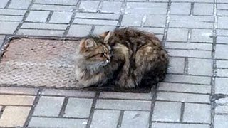 getlinkyoutube.com-هل تصدق ماذا فعلت هذه القطة بعد ان تركها صاحبها