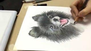 getlinkyoutube.com-Speed drawing pomeranian- วิธีวาดรูปสีไม้ ปอมเมอเรเนียน