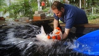 getlinkyoutube.com-$60,000 Japanese Koi Fish
