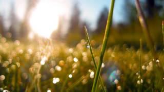 "getlinkyoutube.com-Joseph Haydn - Symphony No. 6 in D, ""Morning"""