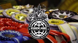 4Show ABKC American Bully Ciudad de Leon (Bullys TV Shows)