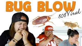 getlinkyoutube.com-Bug Blow Hawaii 2016