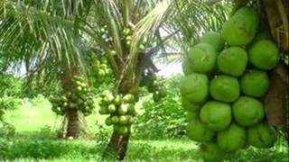 Coconut Water Brazil
