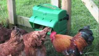 Wise Mountable Poultry feeder from BEC