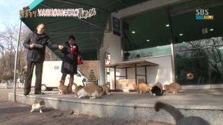 getlinkyoutube.com-SBS [동물농장] - 휴게소를 포위한 고양이떼